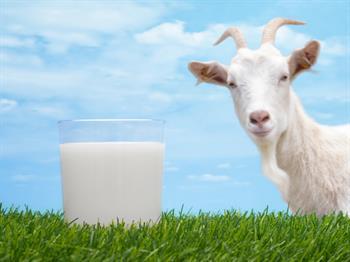keçi sütü