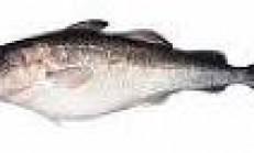 Morina Balığının Karaciğer Yağı