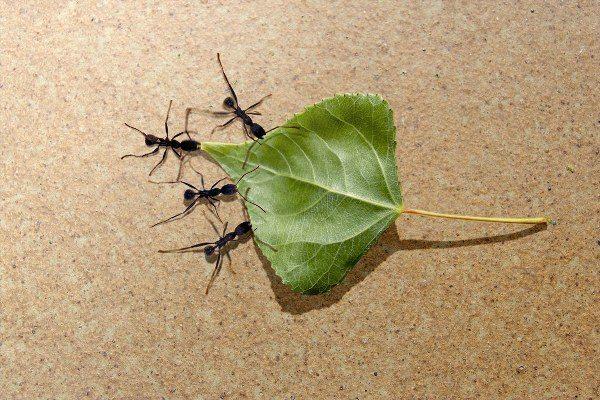 Karıncaları uzaklaştırmak için