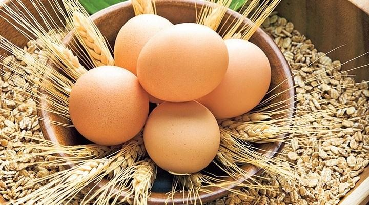 Taze yumurtayı anlamak için test