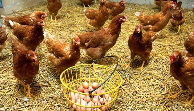 Yumurta tazelik testi