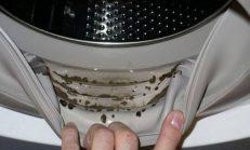 İki Malzeme İle Çamaşır Makinesindeki Küflere Son!