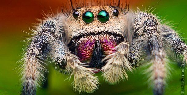 Örümcek Fobisi Ve Örümceklerden Evimizi Temizleme Yolları